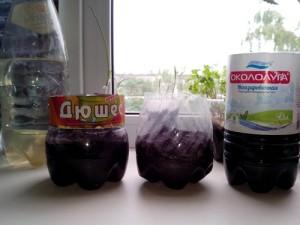 Выращиваем зелень на подоконнике в квартире