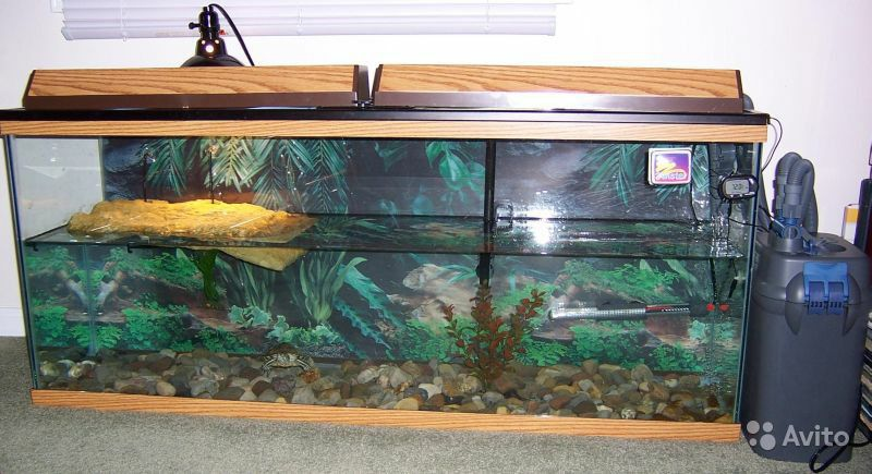 красноухие черепахи уход и содержание в домашних условиях