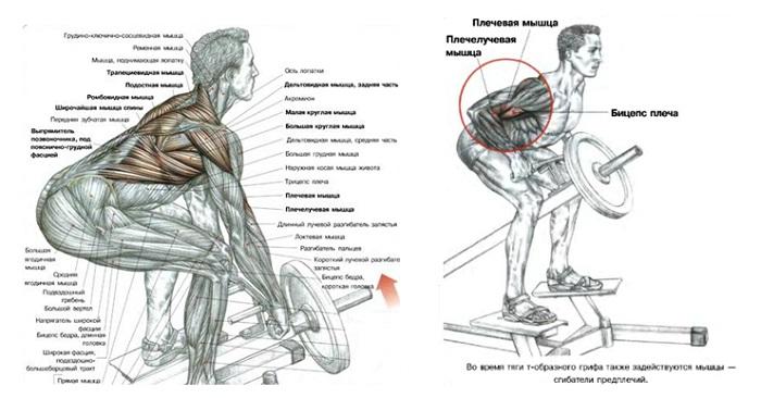 Тяга т-грифа в наклоне - какие мышцы работают